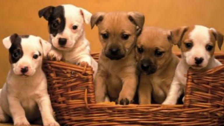 EM SOROCABA: Feira de adoção responsável de pets acontece dia 18 no Campolim