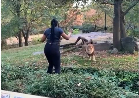 Visitante entra no cercado de leão em zoo e não é atacada; assista