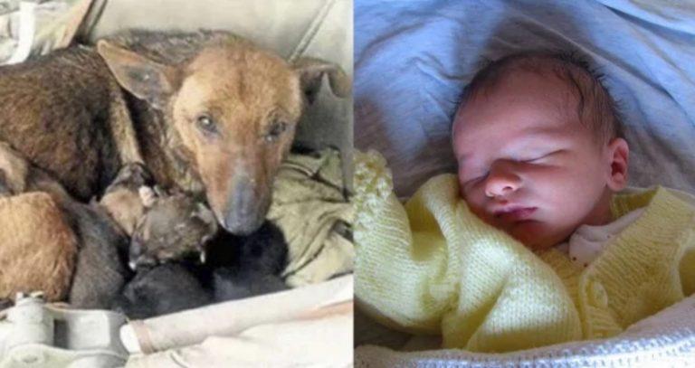 Moradora encontra cachorrinha aquecendo bebê abandonado em sua ninhada