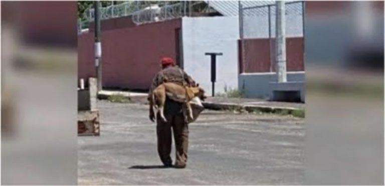 Idoso carrega seu cachorro nas costas para que ele não queime patas no asfalto