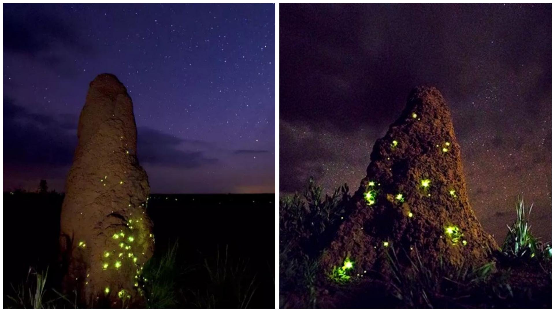 Cupinzeiros iluminados por 'filhotes' de vaga-lumes parecem castelos de fadas
