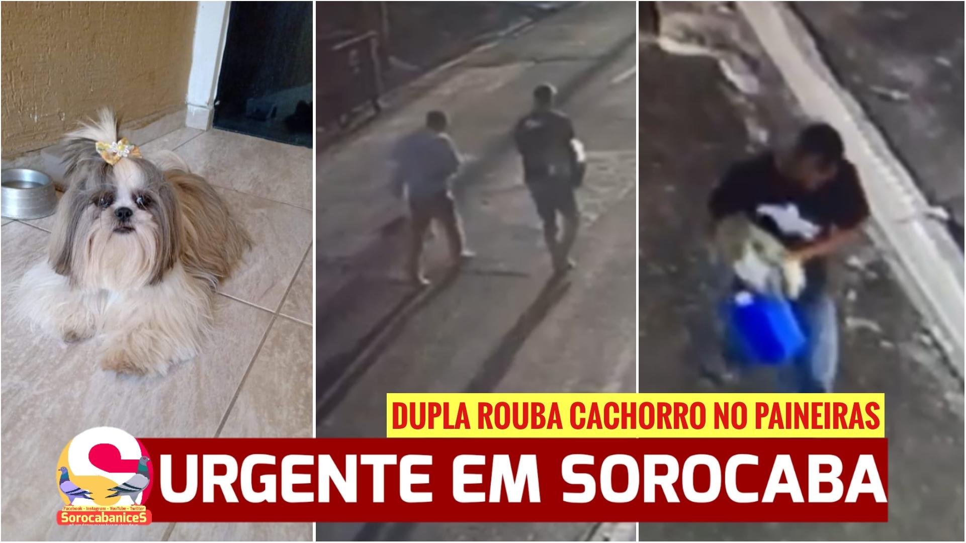 Criança chora por cão roubado em Sorocaba, vídeo mostra dupla com animal