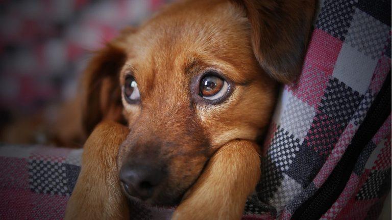 Lei que multa latidos de cães é aprovada, a multa é de mais de R$23 mil aos donos