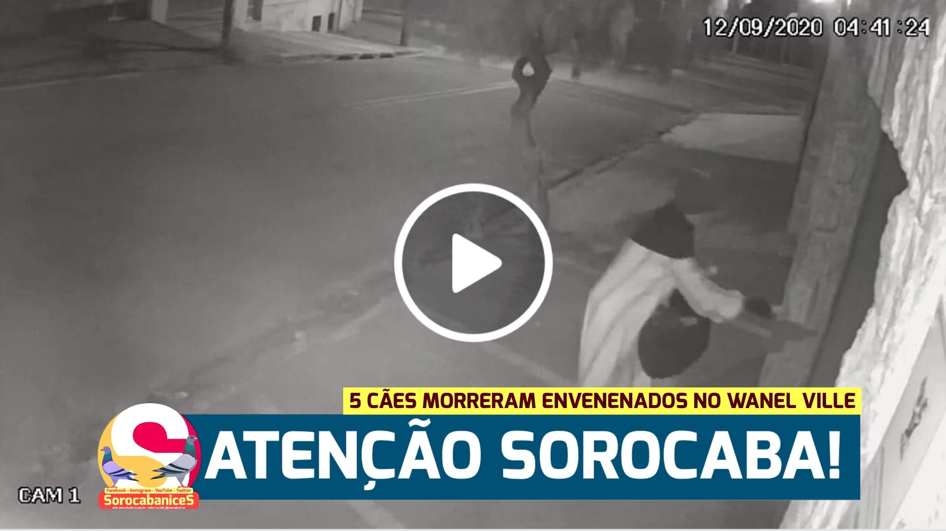 Vídeo mostra mulher suspeita dando comida com veneno para cães no Wanel Ville, em Sorocaba