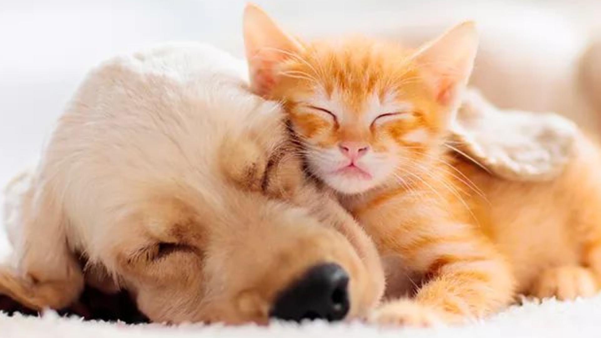 Senado aprova: Até 5 anos de reclusão para quem maltratar cães e gatos