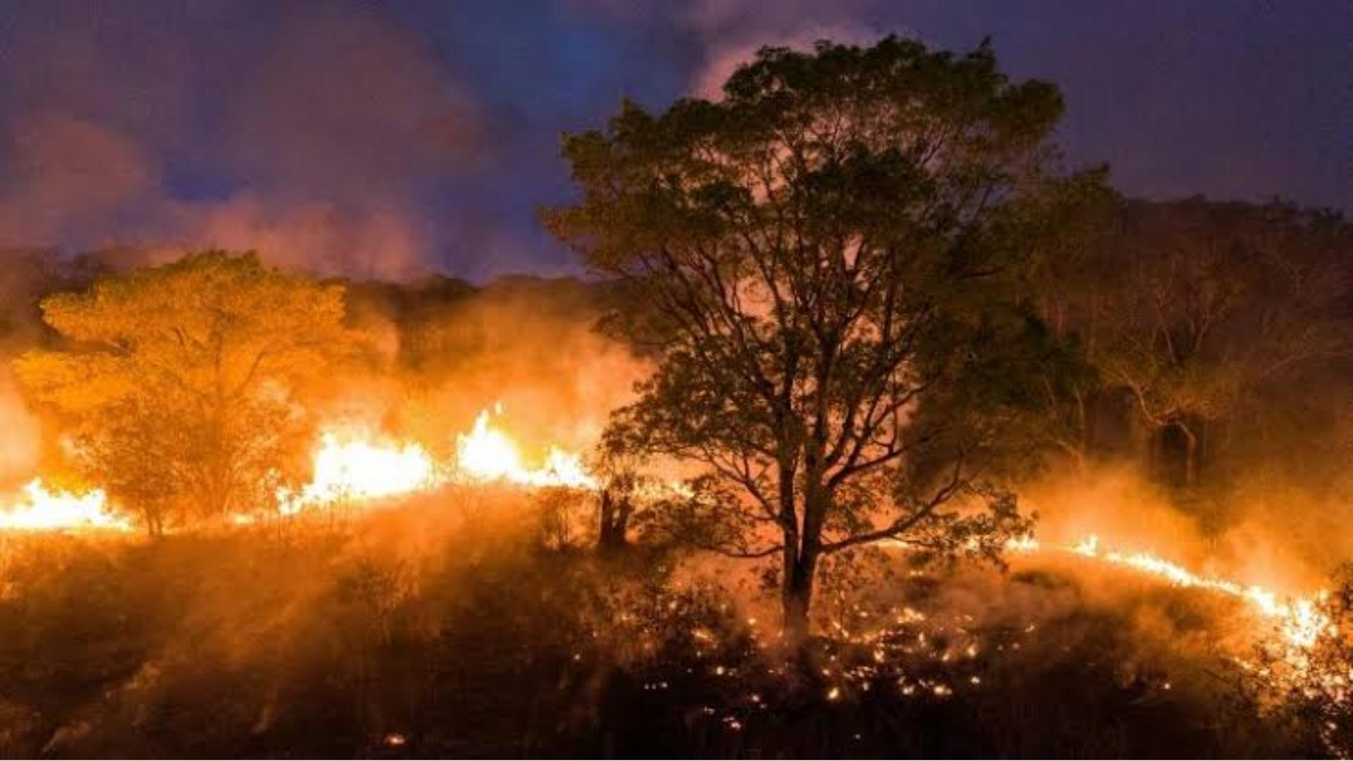 Pantanal de Mato Grosso continua em chamas