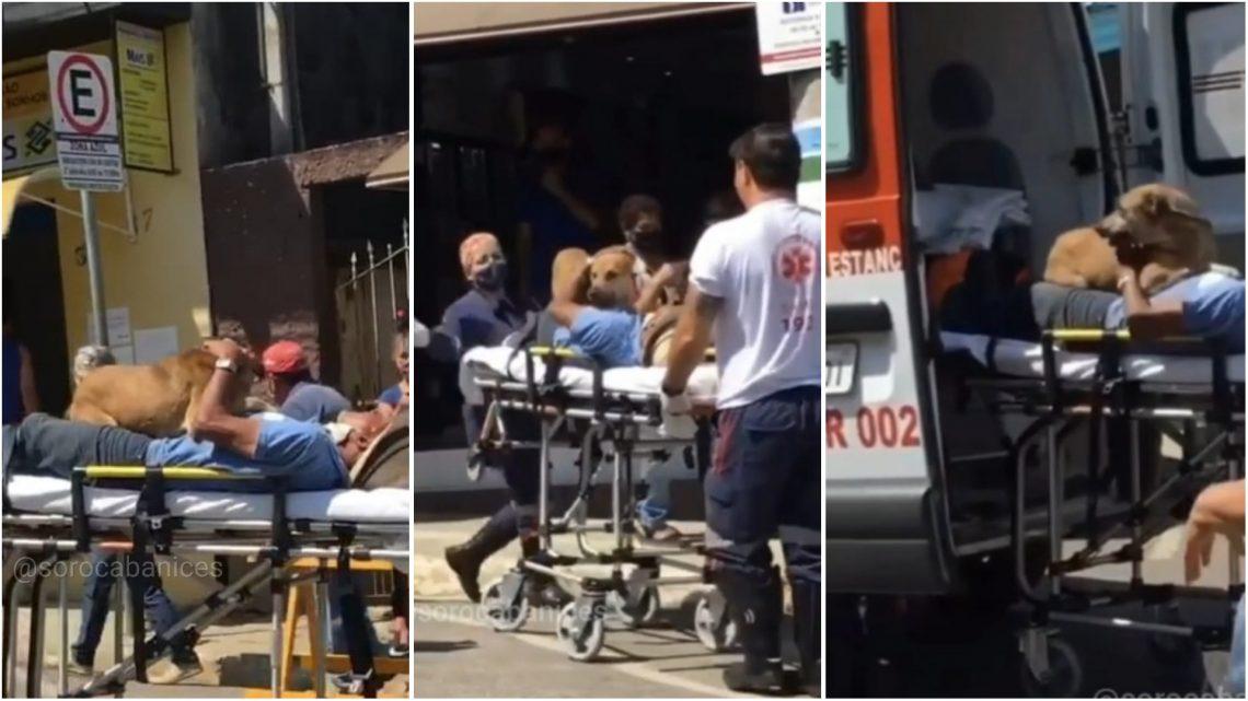 Idoso passam mal em Ibiúna, e seu cachorro o acompanha até a ambulância; video